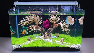 How To Make Bonsai Aquatic Pla…