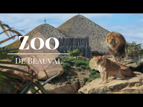 BEAUVAL⎟Le plus beau zoo de France