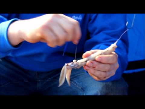How To Bait Up A Whole Squid Bait