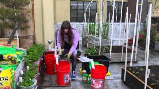 Pamela's Strawberry Container Garden
