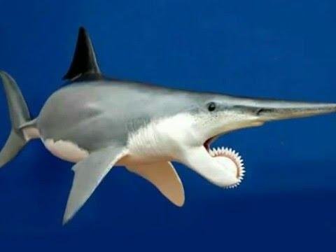 Helicopri n el verdadero tibur n sierra youtube - Requin enclume ...