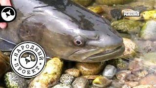 Рыбалка на Байкале Таймень Народный проект
