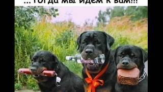 #юмор#смех#карантинНаПозитиве. Карантин на позитиве (юмор, весёлые картинки)
