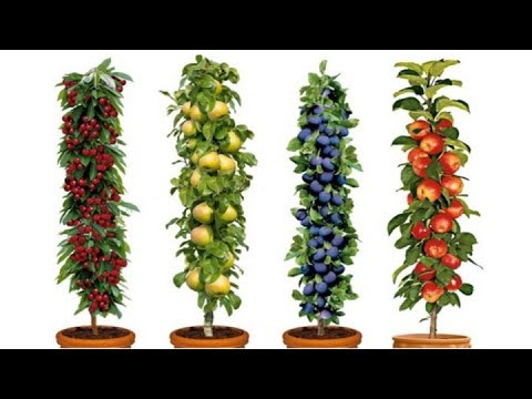 Dwarf Fruit Trees To Grow When Space Is Limited