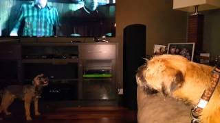 Border Terriers Singing Punk