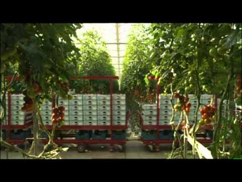 Der Tomatenzug (Film: Unser täglich Brot) - neu vertont