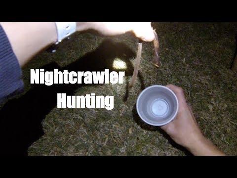 How to Catch Nightcrawlers