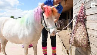Woman Dyes Pony's Hair to Make It Look Like a Unicorn thumbnail