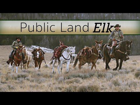 DIY Elk Hunting Public Land - Guy Eastman Hunts His Home Turf!