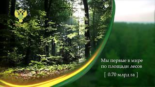 Лес национальное достояние