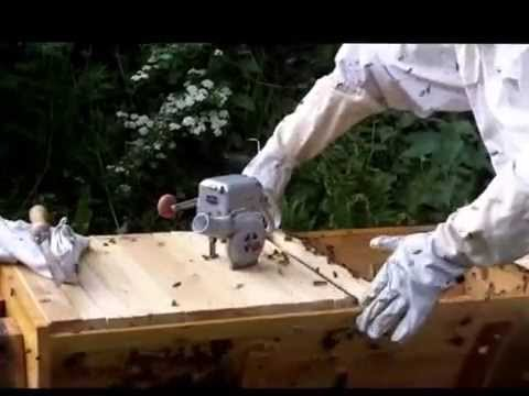 When Bees Go Bad: splitting and moving a colony in a top bar hive