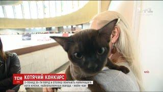 У Києві за звання найкращого кота України боролись представники тридцяти порід