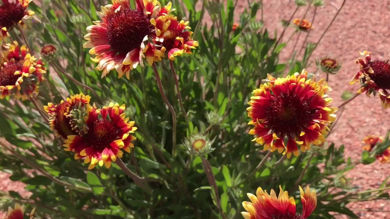 New Mexico Desert Flowers