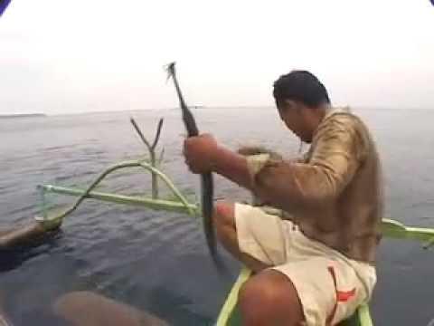 Kite Fishing!