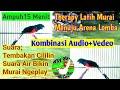 Cukup  Mmenitan Suara Burung Murai Batu Kombinasi Cililin Gacor Rapat Suara Air Terapi  Mp3 - Mp4 Download
