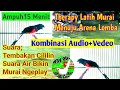 Cukup 15 Mmenitan Suara Burung Murai Batu Kombinasi Cililin Gacor Rapat Suara Air Terapi Omkicau(.mp3 .mp4) Mp3 - Mp4 Download