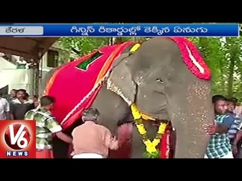 86 Year Old Elephant In Kerala Set To Enter Guinness Book | V6 News