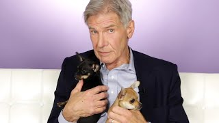 Harrison Ford Plays With Puppies While Answering Fan Questions