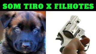 SOM TIRO X FILHOTES - COMO ELES REAGIRAM? ➡️ CÃO DE GUARDA - DO NASCIMENTO ao TREINO DE GUARDA!