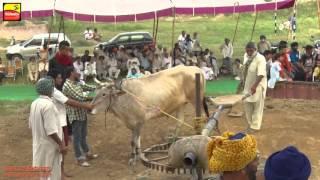 FARWALA (Jalandhar)   BULL HALTI RACES    ਬਲਦਾਂ ਦੀਆਂ ਹੱਲਟ ਦੌੜਾਂ - 2016    Full HD    Part LAST