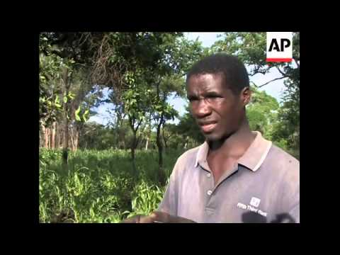 Farmers benefit from carbon credit projects in Mozambique