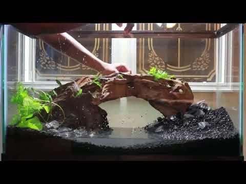 Best Aquarium Setup Ever Must Watch