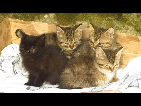 kittens live on the street with the mother cat