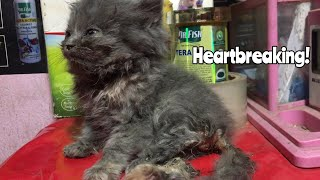 Exposing the Indian Pet Shops| Persian cat, Puppies,  etc | Wildly Indian