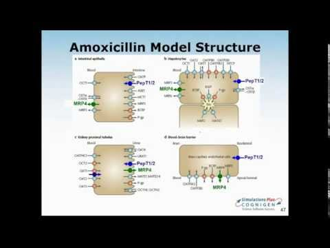 Pediatric PBPK Modeling - Special Considerations in GastroPlus