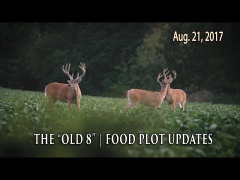 Hunting an Ancient Buck, Food Plot Progress | Midwest Whitetail
