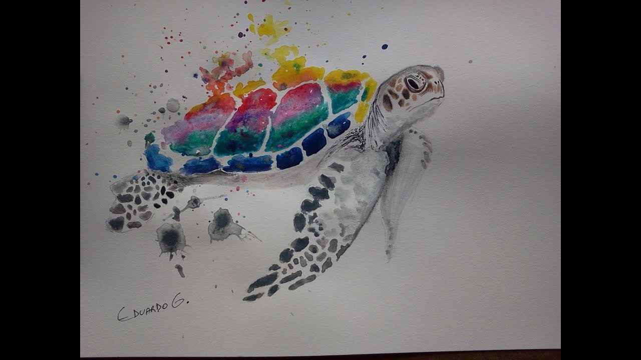 Desenho Tartaruga Aquarela Youtube