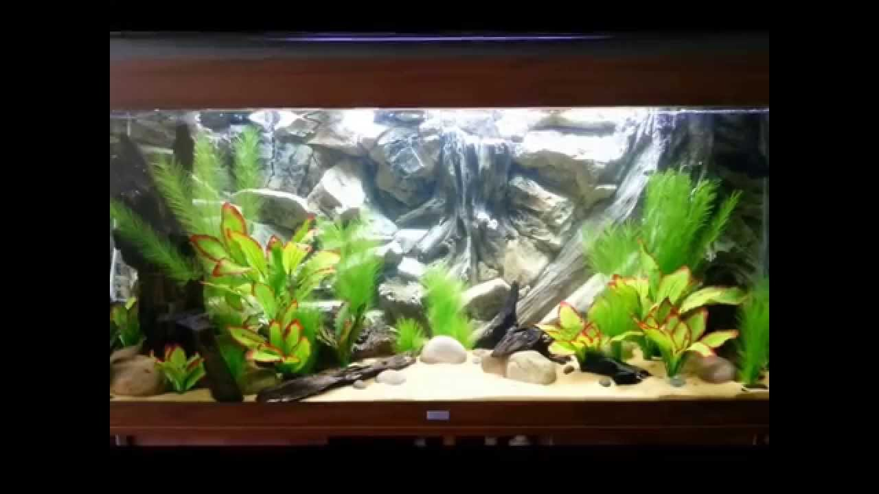 juwel rio 400 new set up 4th wk of water cycle fluval fx6. Black Bedroom Furniture Sets. Home Design Ideas