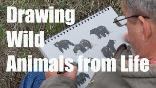 Drawing Animals From Life in Montana