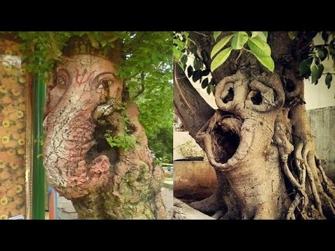 30 Most Unusually shaped Trees That look like other things