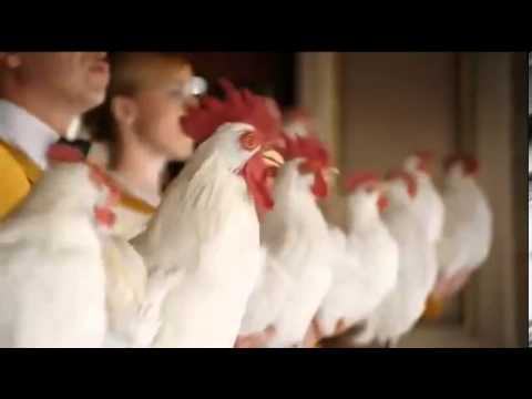 Amazing Foster Farm's chickens sing 'Don't You Want Me '