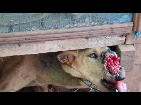 White Heart Animal Rescue & Shelter in Magwe, Myanmar