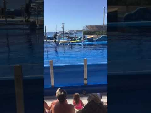 Sea lions at marine land in Spain
