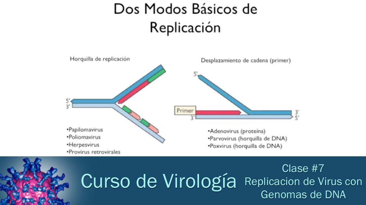 papillomaviridae replicacion cancer abdominal area