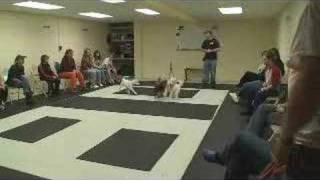 Puppy Training Classes At Www.k9-1.com