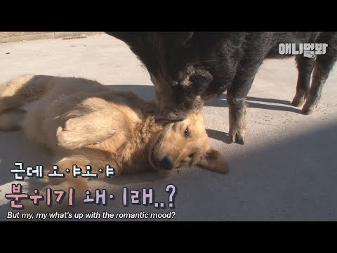 Retriever and piglet couple rubbing salt in singles' wounded hearts...