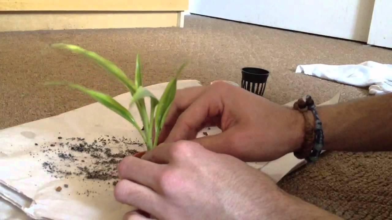 How To Pot Your Aquarium Plants Youtube