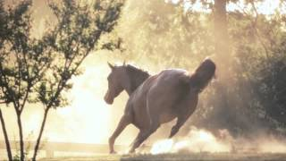 Most beautiful horse film ever