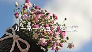 カーネーションの画像 を楽しみながら 花言葉を添えて 動画を作って見ま...