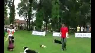 Canine Sportzclub Demo Team: Dog Obedience & Agility Demo @ Cutie Pet Fair 22 Nov 2009 Part3