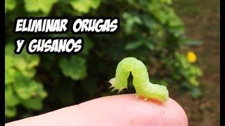 como eliminar orugas y gusanos remedios orgánicos la huerta de ivan