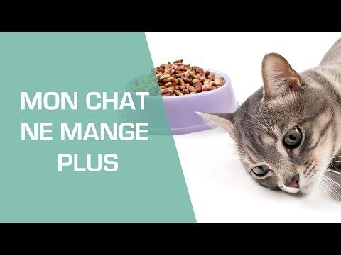 Mon Chat Ne Mange Plus - Animaux