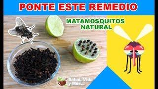 Prepara este remedio contra mosquitos, moscas y cucarachas de tu casa
