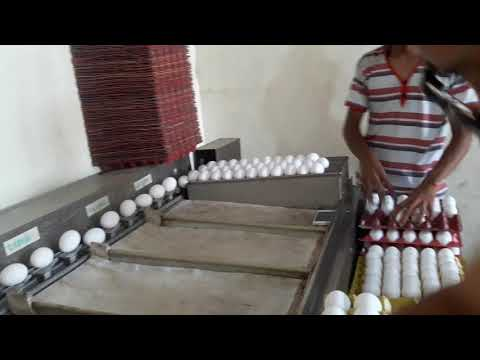 Eggs!!! How to sort from smallest to largest sizes