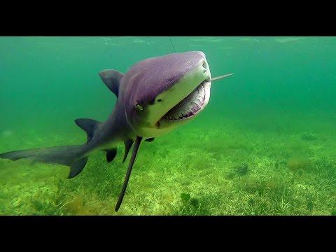 Key Largo Lemon Shark Fishing Florida Keys With Lain Goodwin