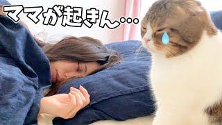 パパ猫「ママが起きません…」